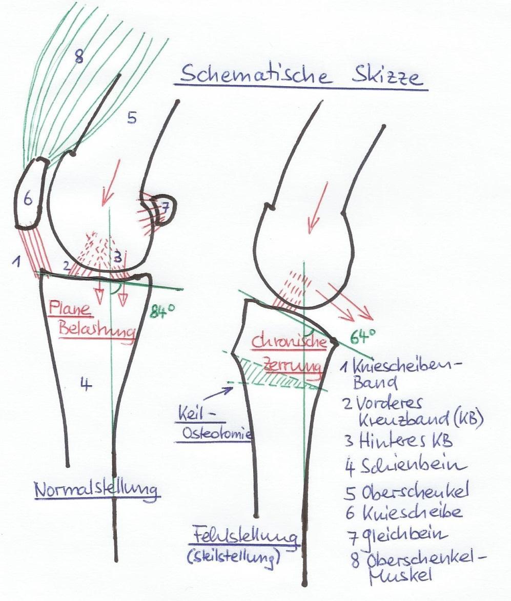 Kreuzbandprobleme - Kleintier Chirurgie